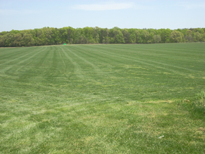 Southern Maryland Residential Sod